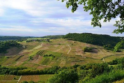 Views of vines Jura guided walking France
