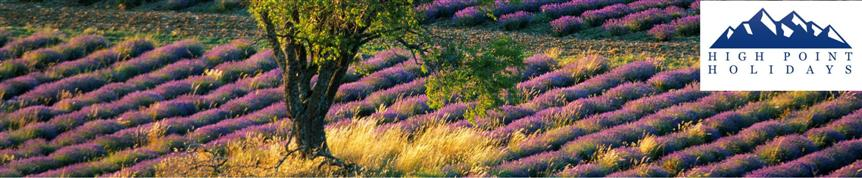 Lavender field on guided walking holiday in Baronnies, Provence in France with High Point Holidays