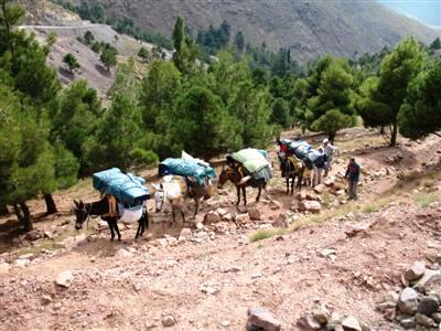 mule transport Toubkal High Atlas Morocco Africa guided trekking holidays and tours