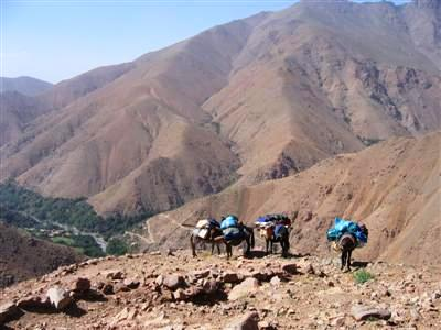 mules carrying gear on descent towards Amsourzerte in Toubkal massif