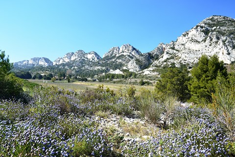 Alpilles hills and flowers walks French trails Provence
