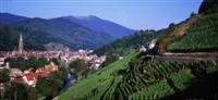 Alsace vineyards and vosges independent walking holiday