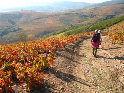 Autumn colours in Beaujolais vines guided walking France