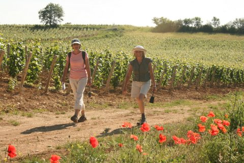 self guided walking France chardonnay vines