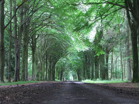 Grovely wood wildlife England self guided walks in Wiltshire