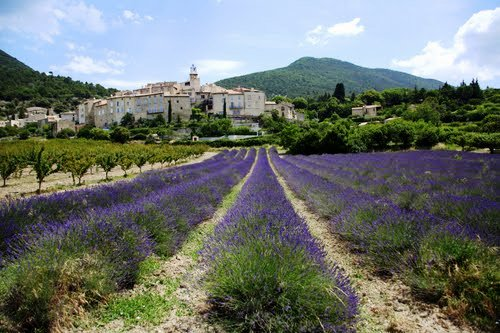 venterol lavender fields self guided walking france