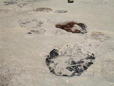 Dinosaur tracks Jura France guided walking holidays and tours