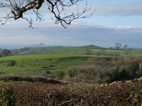 Glastonbury Tor from Friars Oven